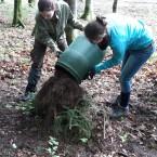 Neues Zuhause: Falls ein Ameisenvolk den Baumaschinen im Wege steht, wird nicht beseitigt sondern behutsam umgesiedelt.