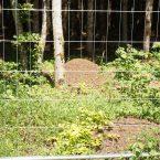 Der Schutz seltener Tiere steht ganz oben auf der Prioritätenliste. Bauten der Waldameisen wurden mit Schutzgittern von der Baustelle abgetrennt.